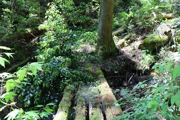 水晶山遊歩道の川にかけられた木製の橋