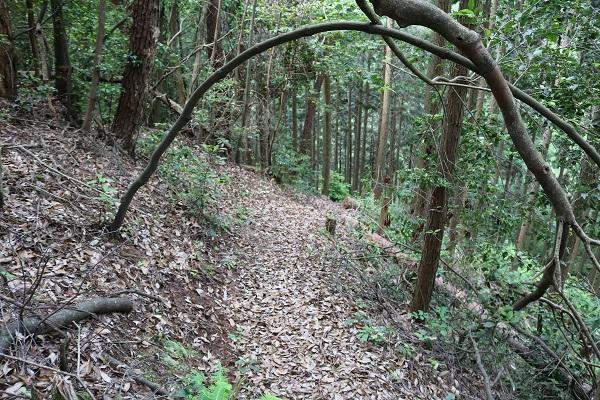 関市権現山の登山道