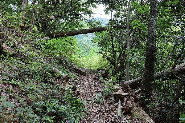 関市権現山登山道の開けた場所