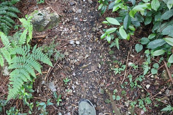 関市権現山登山道のところどころに緩い地面