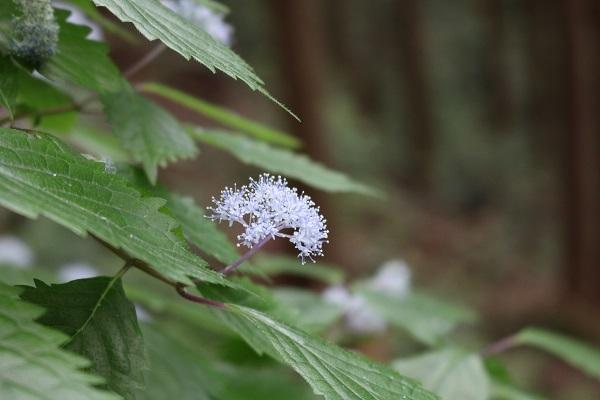 関市権現山登山道に見られる花々