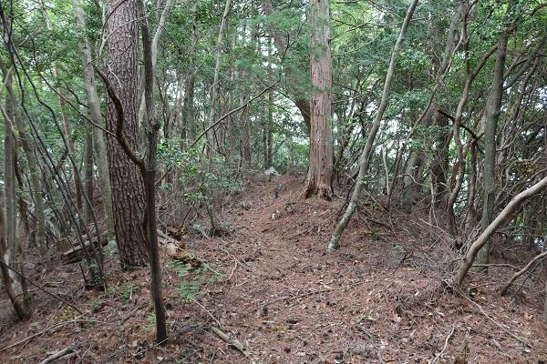 関市権現山頂上付近の下り坂