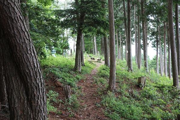 関市権現山頂上まで最後の登山道