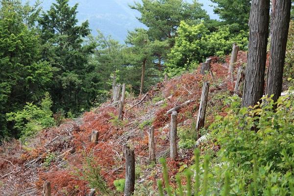 関市権現山頂上南側の伐採跡