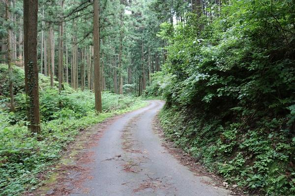 関市権現山の下山完了を示す車道