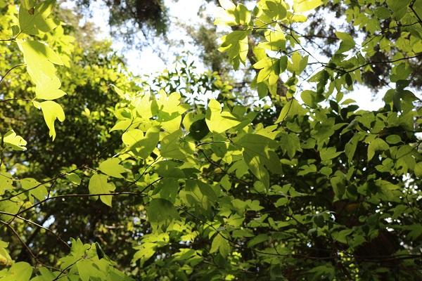 関市権現山の新緑