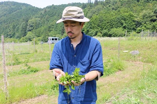 露地栽培関むぎパッションフルーツの若葉で天ぷら