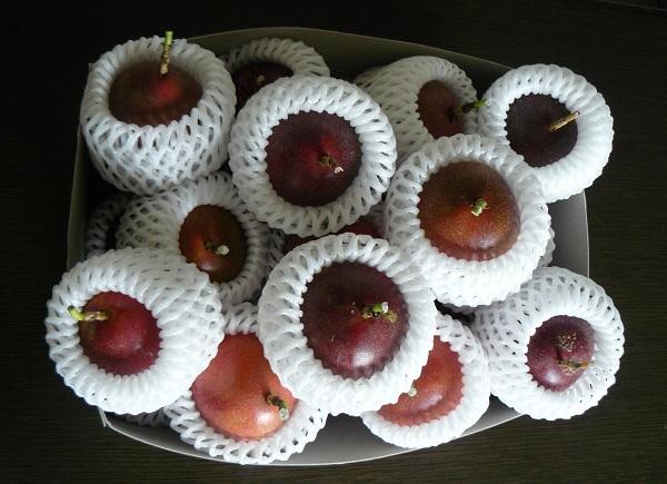 露地栽培関むぎパッションフルーツの生玉