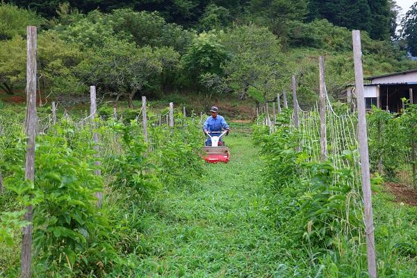 パッション畑の草刈りをする古池さん