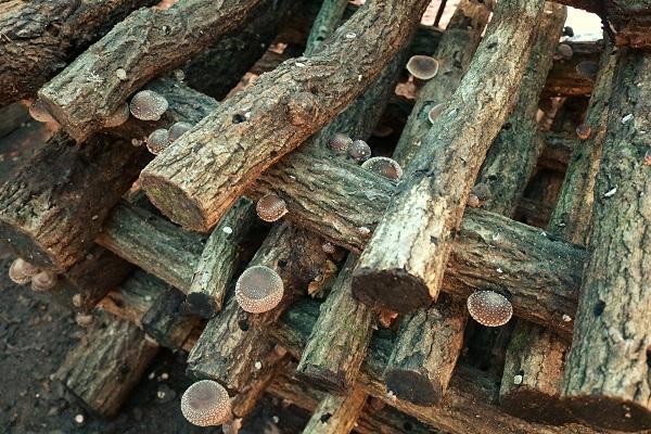 八滝ウッディランドの井桁に組まれた原木