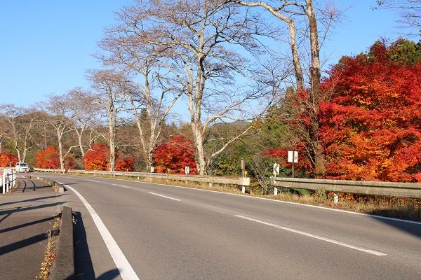 県道58号線沿い清兵衛渕付近の紅葉
