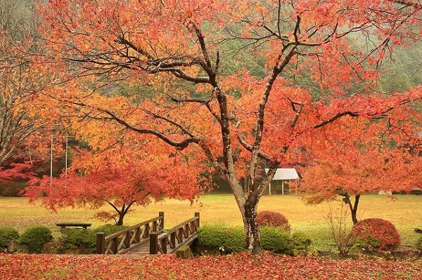 八滝ウッディランドの紅葉