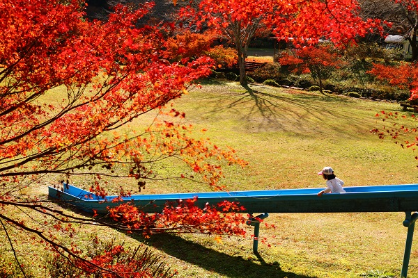 八滝ウッディランド名物のロングすべり台