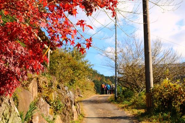 関市武儀地域の田舎道