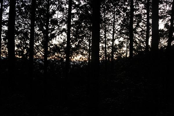 平成の山から初日の出を見る会登山の道中