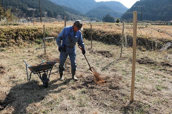 パッションフルーツ畑に肥料を撒く古池さん