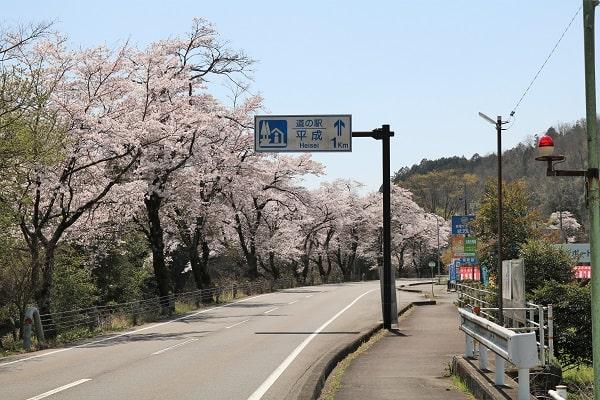 県道58号線沿い(大門地区近辺)の桜並木