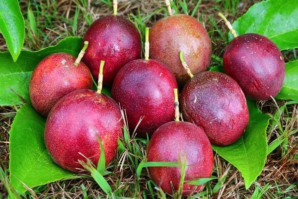 岐阜県関市産パッションフルーツの果実