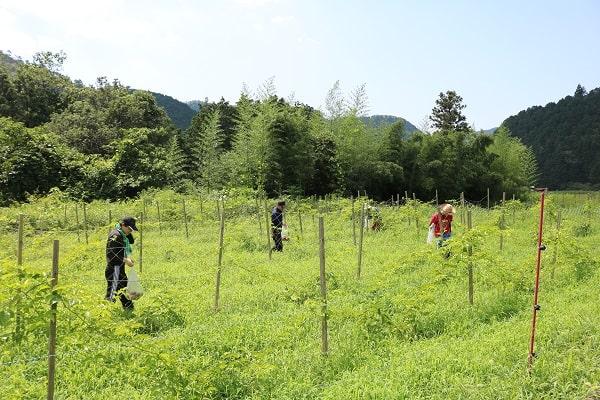 広大な畑を歩き回って果実を探す参加者