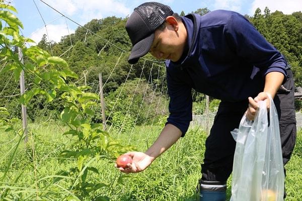 自然落果した果実を収穫する参加者