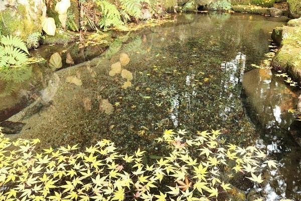 お宮の清水に浮かぶ紅葉
