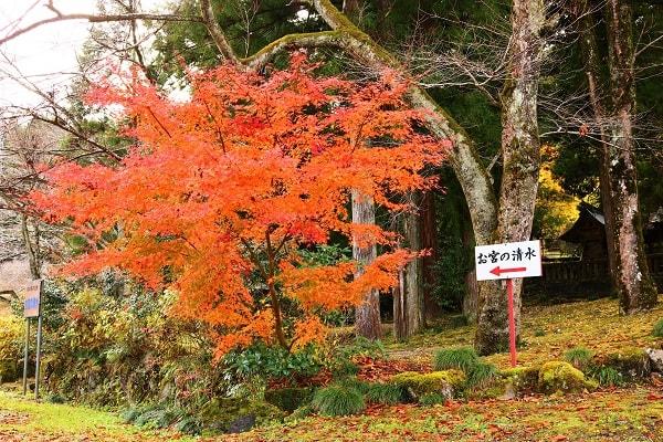 お宮の清水入り口の紅葉