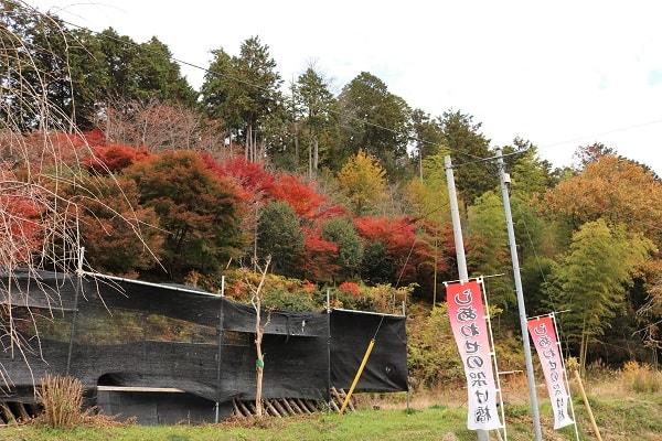 しあわせの気の森の紅葉