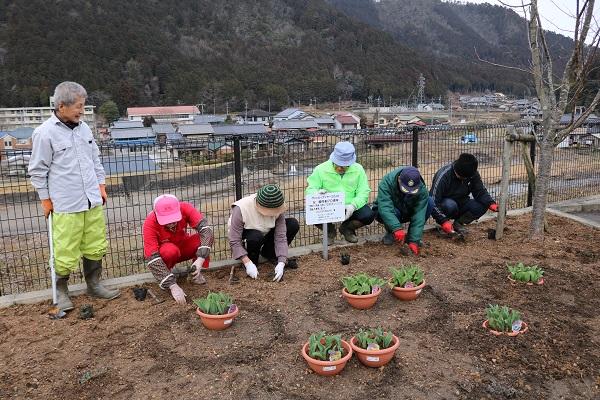 芝桜を植えるロマンウォークの会会員