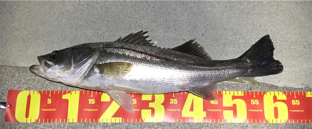 f:id:mukogawaichimonjitaro:20200622000820j:image