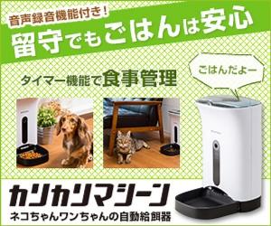 f:id:mumitiyoko11:20181229171401j:plain