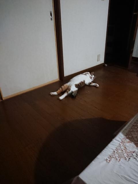 f:id:mumitiyoko11:20200905012717j:plain