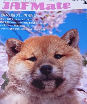 f:id:mumitiyoko11:20210320011747j:plain