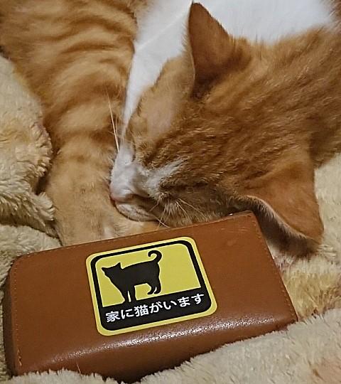 f:id:mumitiyoko11:20210521230039j:plain
