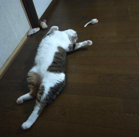 f:id:mumitiyoko11:20210821072311j:plain