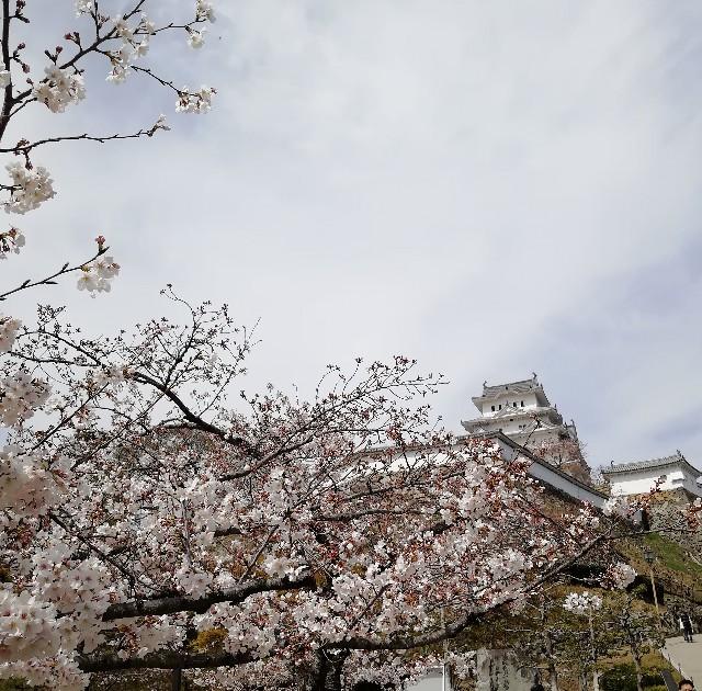 f:id:mumuhiromu:20210327174425j:image