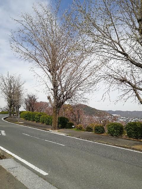 f:id:mumuhiromu:20210327175148j:image