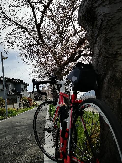 f:id:mumuhiromu:20210327192135j:image