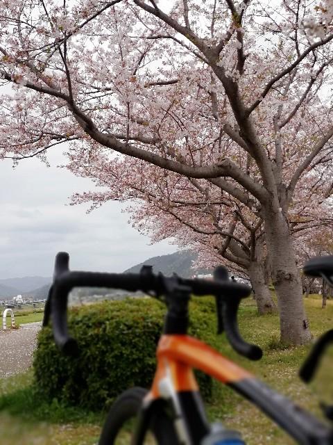 f:id:mumuhiromu:20210403211934j:image