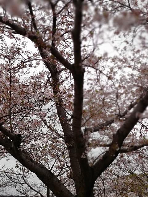f:id:mumuhiromu:20210403212007j:image
