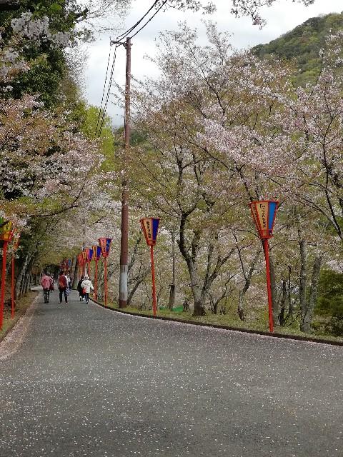 f:id:mumuhiromu:20210403215527j:image
