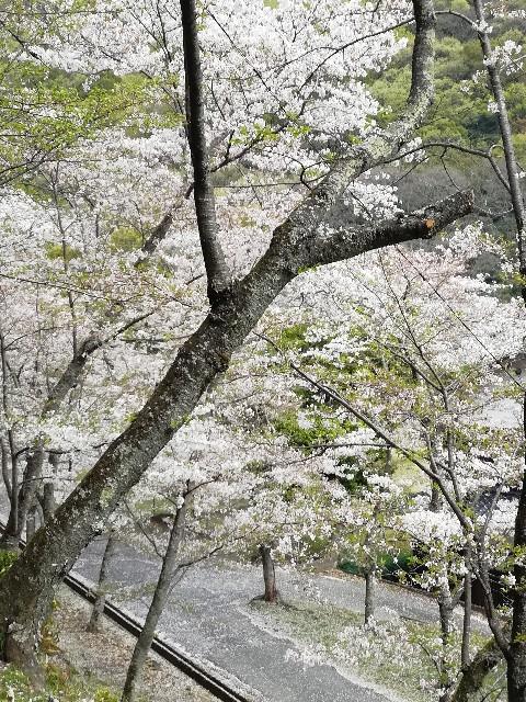 f:id:mumuhiromu:20210403215556j:image