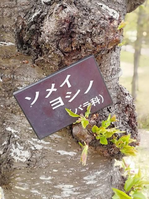 f:id:mumuhiromu:20210403221243j:image