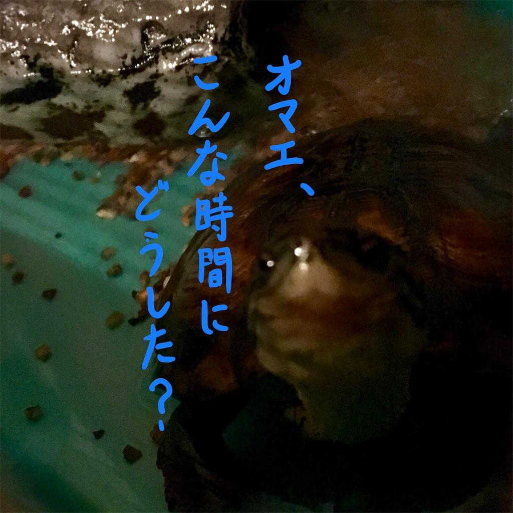 f:id:munazouchan48:20171007115339j:image