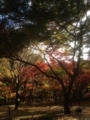 深大寺の紅葉2