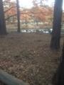 深大寺の紅葉3