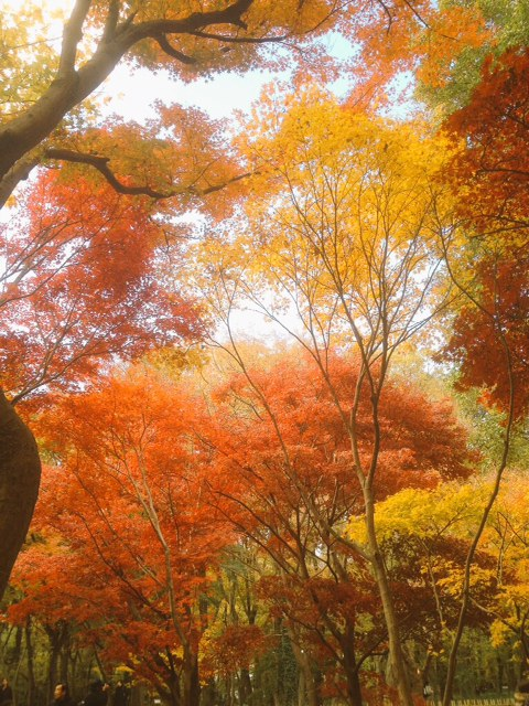 深大寺の紅葉