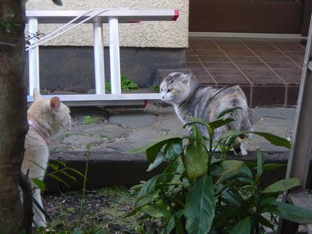 f:id:muraatsushi:20061223134051j:image