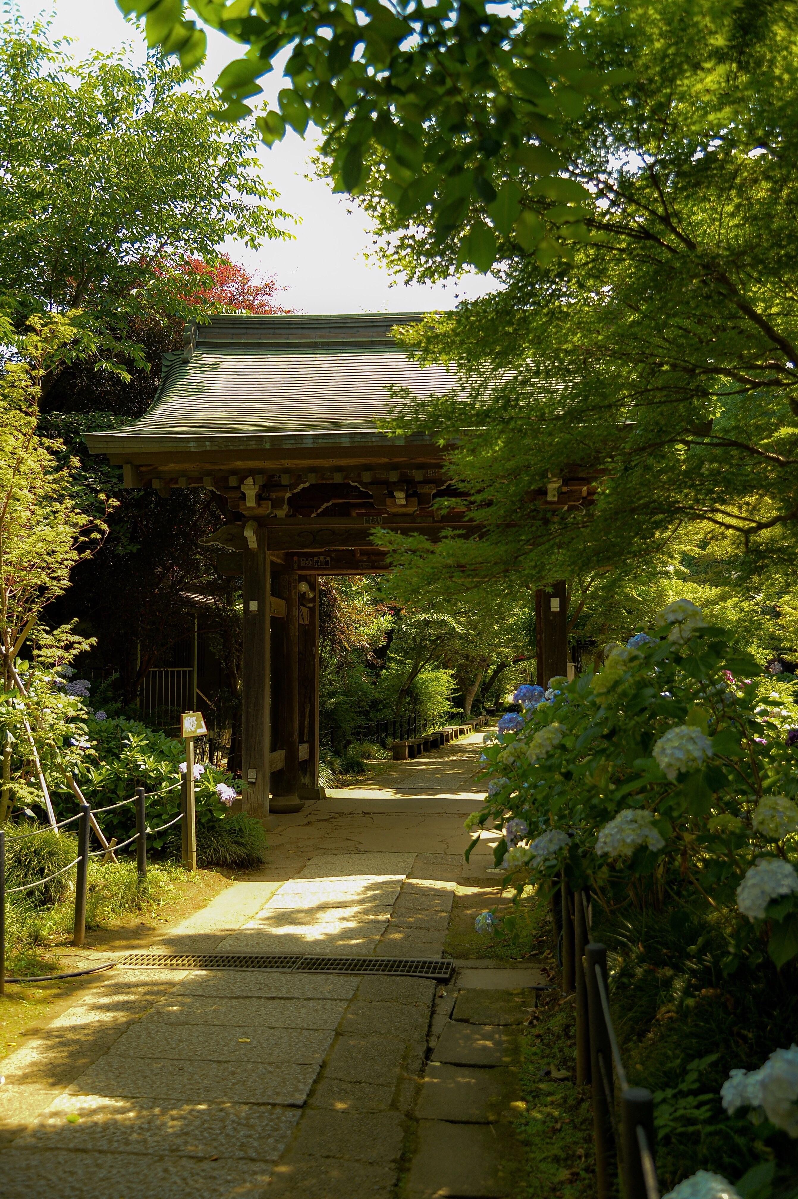 f:id:muramasachang:20210613055127j:image