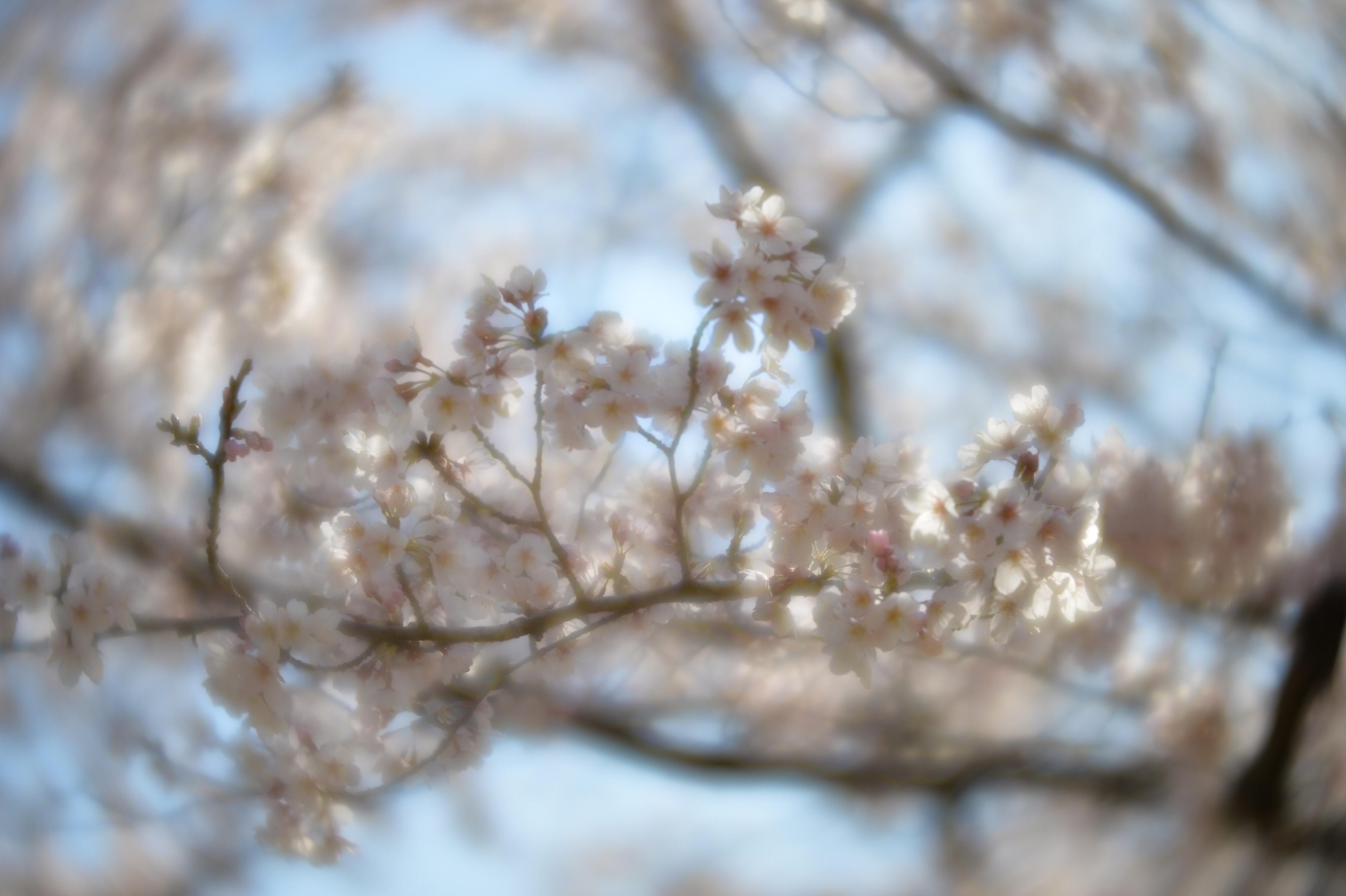 f:id:muramasachang:20210707014711j:image