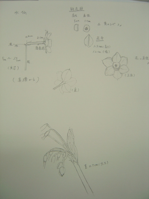 f:id:muramoto-wagashi:20110217180908j:image:left